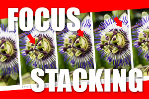 00_focus-stacking.jpg