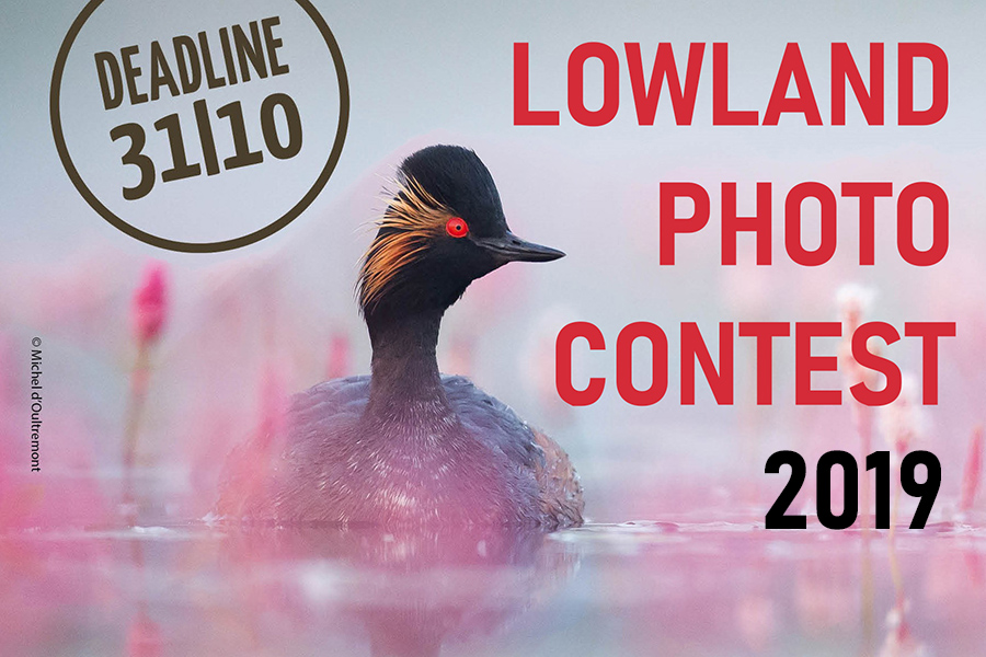 LowlandContest2019_cover NL-visual-klein